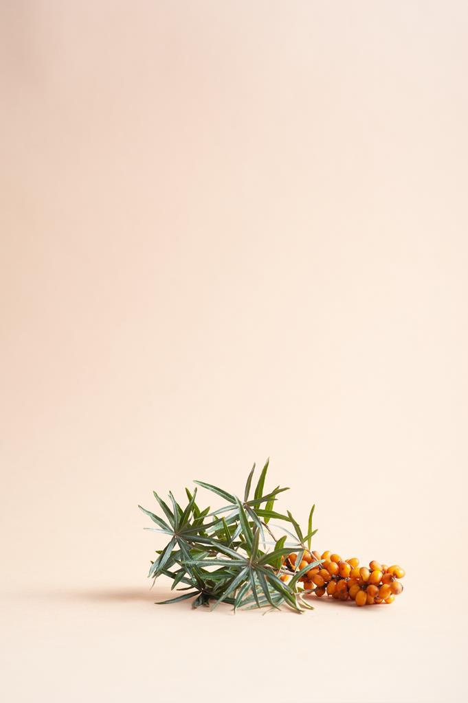 Gałązka rokitnika z owocami.