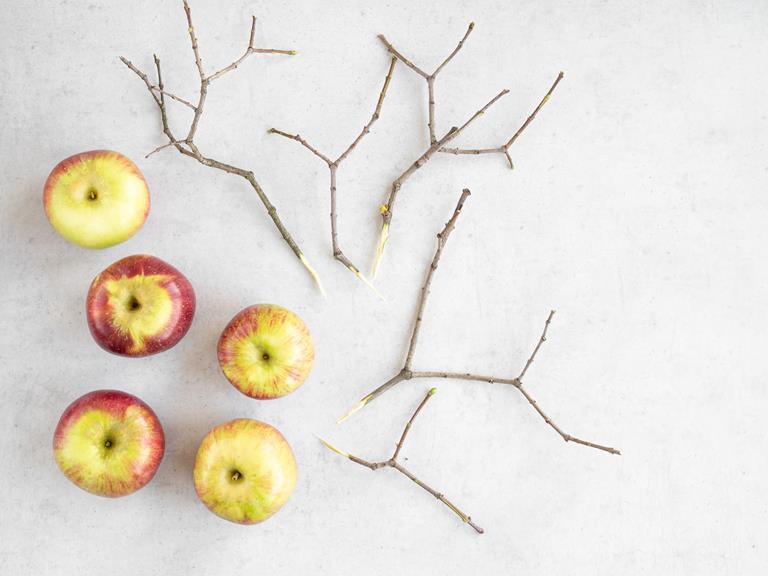 Jabłka i gałązki.