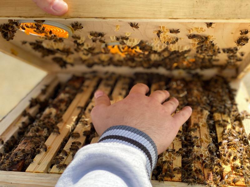Pszczoły i pszczelarz